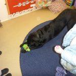 Guide dog visit