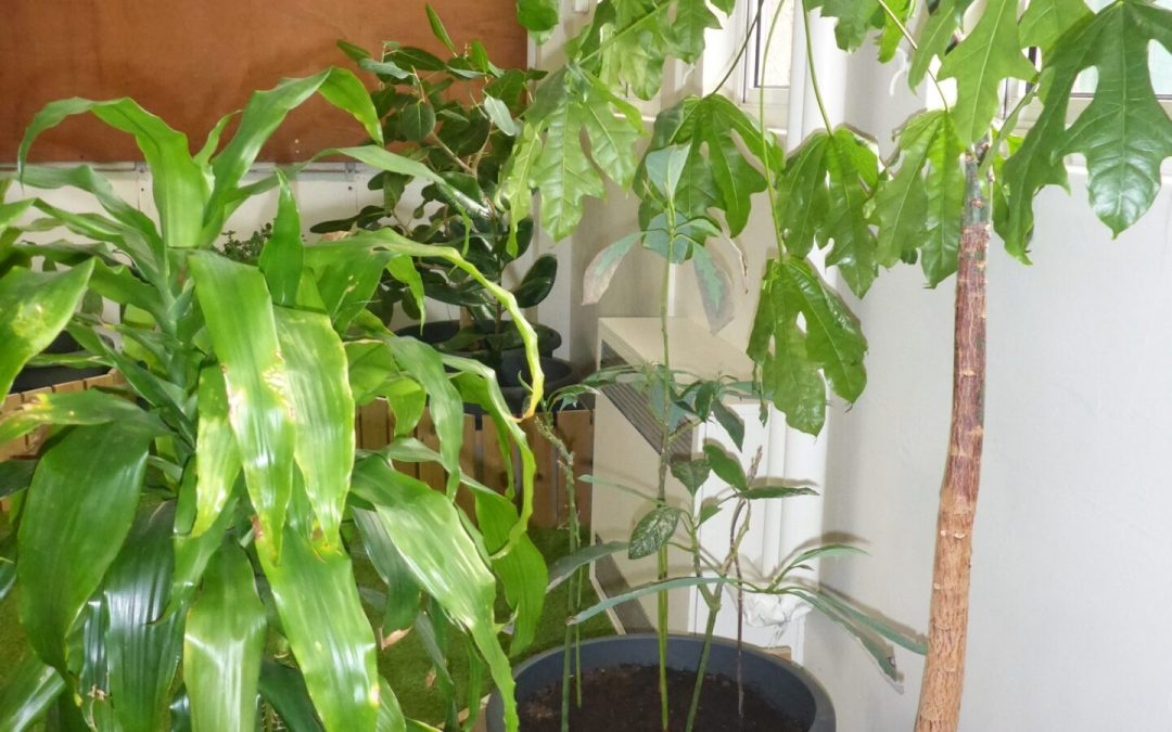 Our indoor rainforest – Phase 1