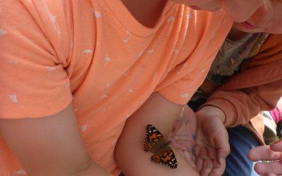 Caterpillars and butterflies 2021